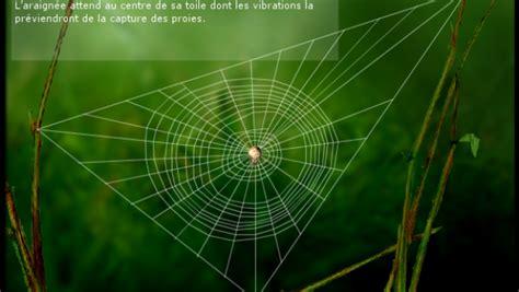 comment l araign 233 e construit sa toile espace des sciences