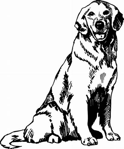 Retriever Golden Line Pages Decal Labrador Coloring