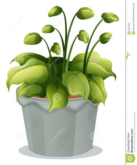 plante dans la chambre les plantes vertes dans la chambre annikapanika of plante
