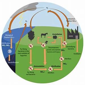 File Nitrogen Cycle 1 Svg