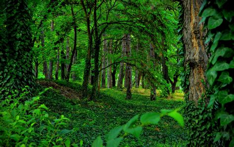 Green Forest Image Desktop by Green Forest Hd Wallpaper Background Image 3000x1887