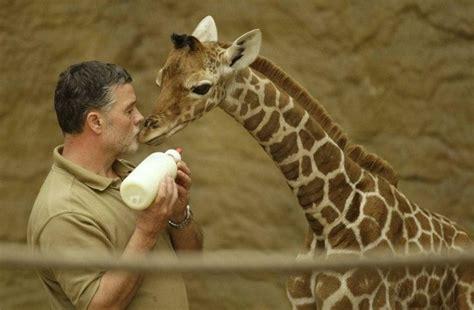 b 233 b 233 girafe paperblog