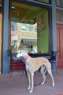 Walmart supercenter august 31, 2020 the best local grocery store. Coffee Hound | Bunny posed in front of the Coffee Hound, a l… | Flickr