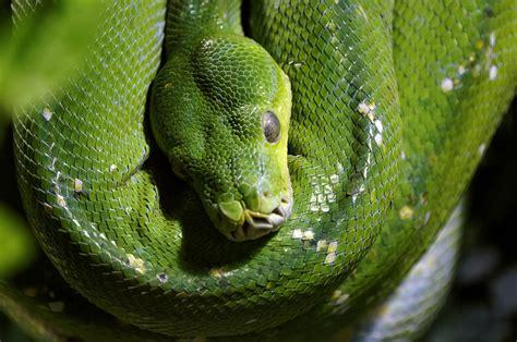 Rainforest Snakes   Photos & Info   Thinkjungle.com