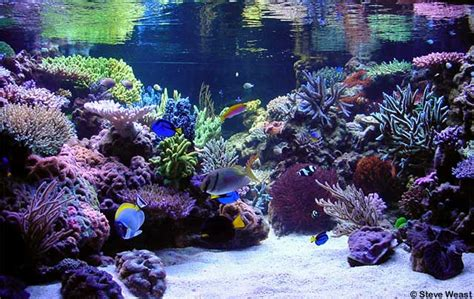 sea reef aquarium how to tell if your saltwater reef aquarium reefedition