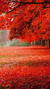 Wallpaper, Nature, Scenery, Park, Autumn, Red, Foliage