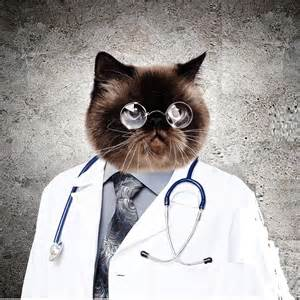 the cat doctor by michael moffa published august 5 2013 size is
