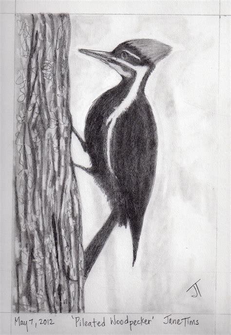 gallery  pencil drawings  animals nichepoetryandprose