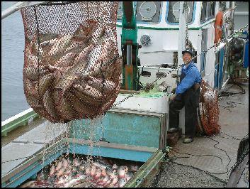 Fishing Boat Restaurant Japan by Asia Fishing Proveedores De Mano De Obra De Buques Pesqueros