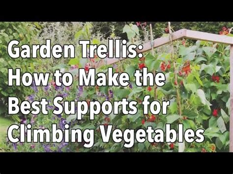 building  trellis  supports  climbing vegetables