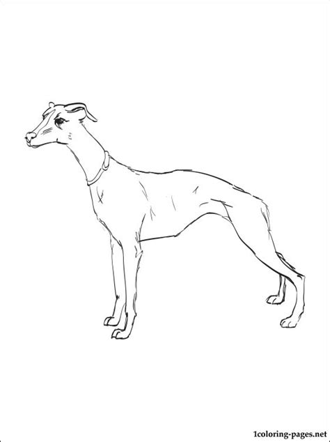 whippet coloring page coloring pages