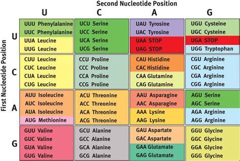 genetic code rna   genetic code mcat biochemistry review
