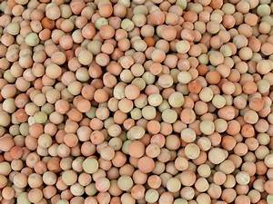 Field pea: crop management and production | Agriculture ...