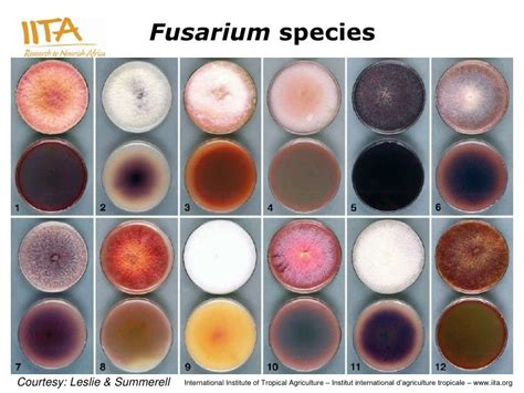 Biodiversity of Toxigenic Fungi and its Implications in ...
