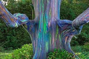 5 of the most beautiful trees in the world