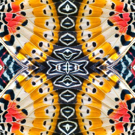 stunning patterns    macro butterfly