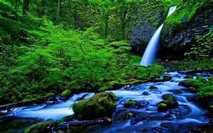 Waterfall, And, Stream, Green, Forest, Rocks, Green, Moss, Green