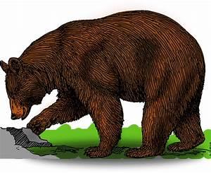 Free to Use & Public Domain Bear Clip Art