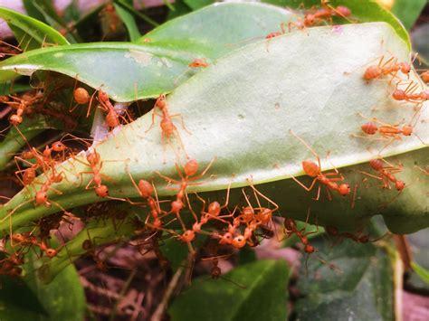 ameisen im beet ameisen im beet 187 so vertreiben sie sie erfolgreich