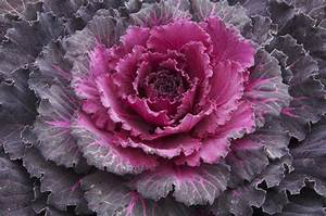 Healthy Cabbage Recipes - Health Alliance Blog - Helping ...