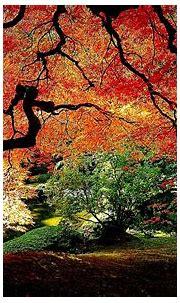 Most Beautiful Wallpapers Ever - WallpaperSafari