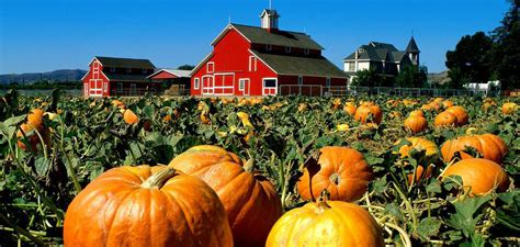 tti floor care cookeville tn 100 30 pumpkin patches in chicago area