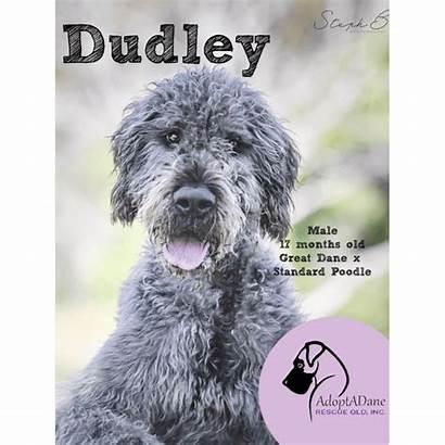Petrescue Dudley Dog Dane Poodle