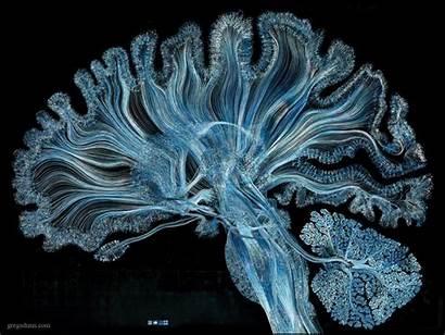 Dunn Greg Neuro Blues Neuroscience Self Reflected