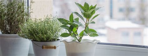 houseplants garden blooming indestructible