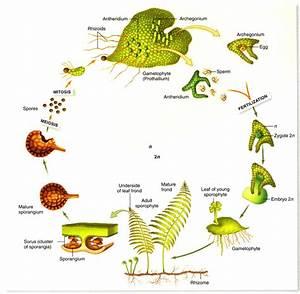 Bio 1106 Study Guide  2012-13 V  Y   Y At