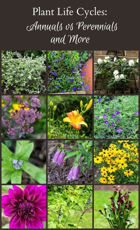 plant types annual perennial plant life cycles annuals vs perennials and more what s the plant life cycles and the o jays