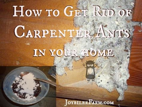 how to get rid of small ants in kitchen get rid of ants in carpet floor matttroy