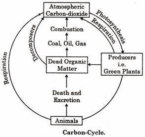 4 Common Biogeochemical Cycles: (explained with diagram)