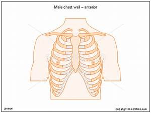 Male Chest Wall  U2013 Anterior Illustrations