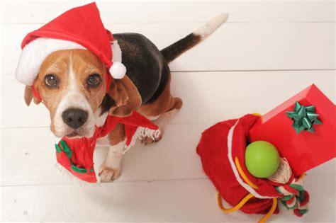 whatre  buying  dog  christmas peoria az