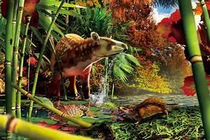 Prehistoric Hedgehog, Tapir Species Discovered in Canada ...