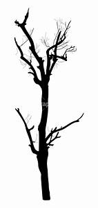 Dead Tree Royalty-Free Vectors, Illustrations and Photos