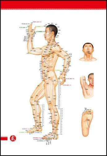 Acupuncture Chart | eBay