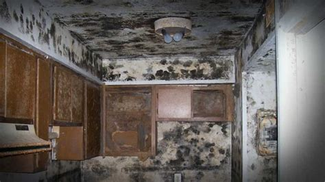 discovered mold   middle   renovation project