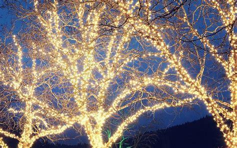 how to wrap christmas lights garden solar lighting ideas and tips