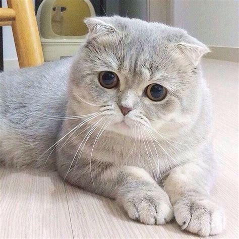 welche katzenrasse ist die katze auf dem bild tiere
