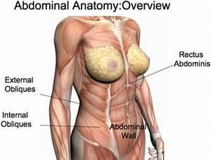 Gallery For  U0026gt  Female Abdominal Muscle Anatomy