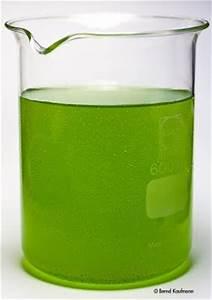 Grünes Wasser Im Gartenteich Hausmittel : aquamax das weblog zur website gr nes wasser schwebealgen im gartenteich ~ Watch28wear.com Haus und Dekorationen