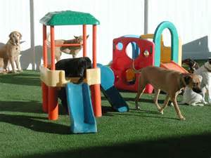 Dog Days Doggie Daycare and Boarding