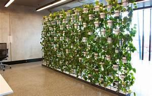 The Urban Garden: Auckland's indoor plant hire specialists