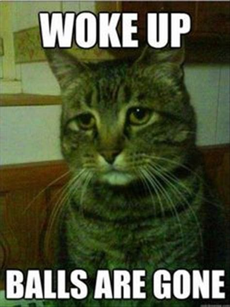 Funny Pussy Memes - put your rain coats on it s raining funny cats and dogs 24 pics