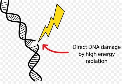 Dna Damage Radiation Therapy Cell