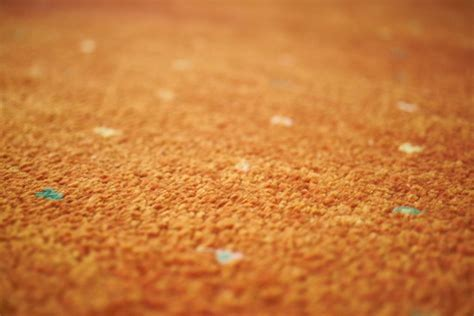 Teure Teppiche Erkennen by Teppichmotten Erkennen Und Wirksam Bek 228 Mpfen Hier Einige