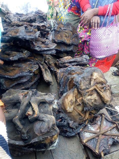 balancing bushmeat trade  conservation vital  ensure
