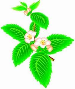 Bienfaits Du Thé Vert : les bienfaits du th vert intelligence verte ~ Melissatoandfro.com Idées de Décoration